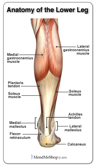 calf pain and the calf muscles the gastrocenemius and soleus muscles
